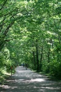 MKT Trail in Columbia, Missouri. MKT Trail merupakan singkatan dari Missouri Kansas Trail dengan panjang 9 miles atau 14 KM