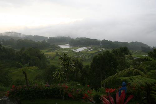 Batutumonga pagi hari
