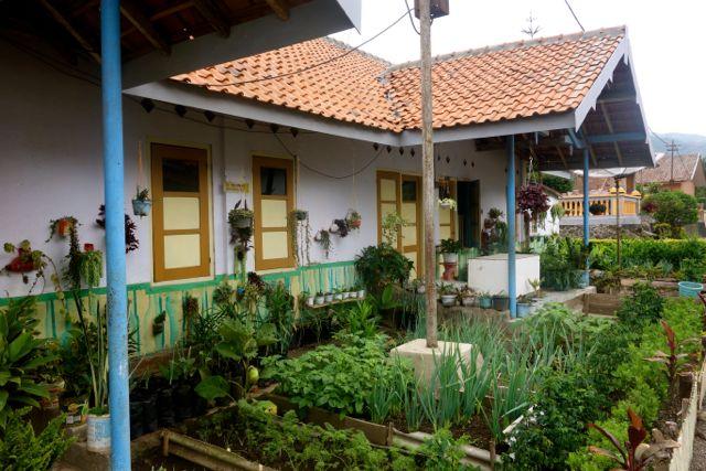 tiap rumah ada kebun sayurnya....